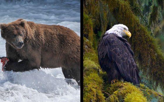 Alaska Announcement Images